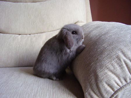 House Training - Adorable Rabbits